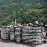 薪の乾燥について